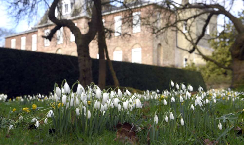Snowdrop Walk at Ryston Hall, Downham Market