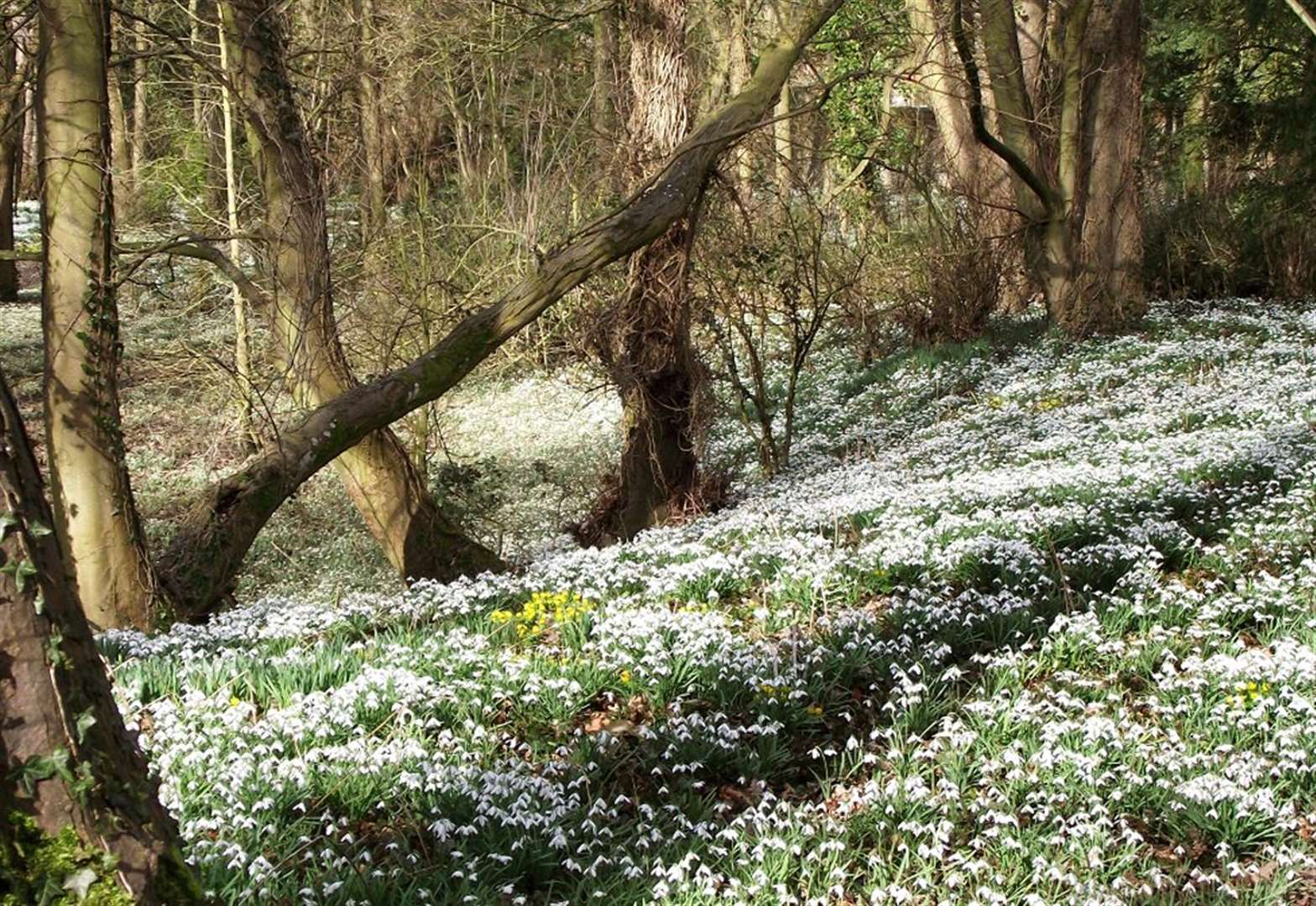 Man jailed for theft of snowdrops from Walsingham estate