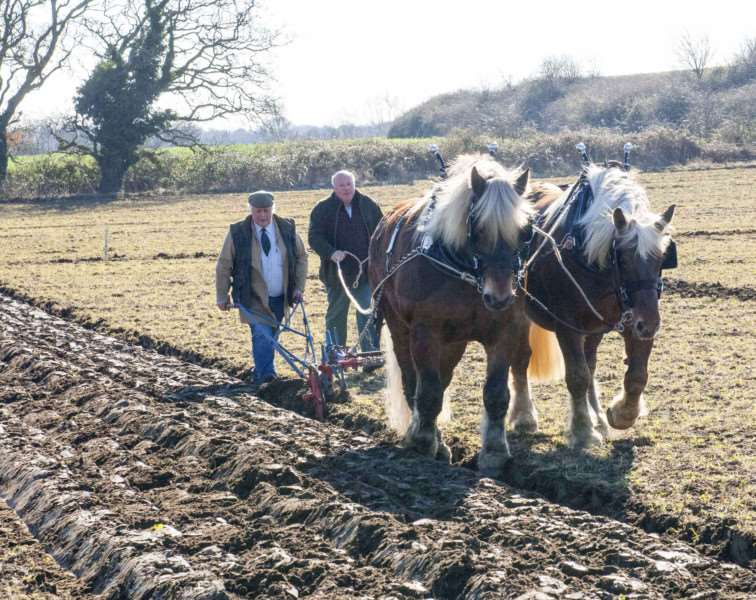 Charity Ploughing Match at Hall Farm Roydon IAO East Anglian Air Ambulance .Pictured East Anglian Champion Horses Univere. Belereo with Steve Roberts. Paul Smith.