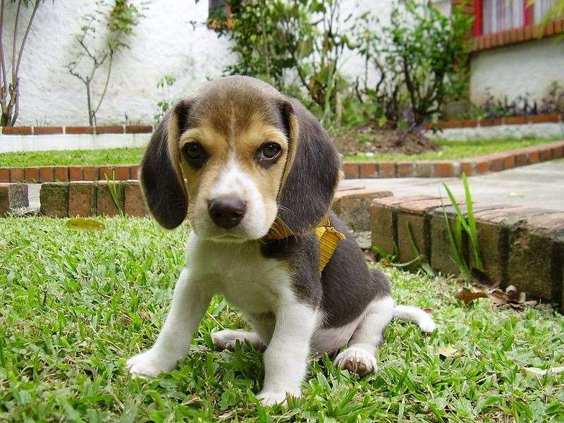Puppies must be given a valid microchip by eight weeks of age