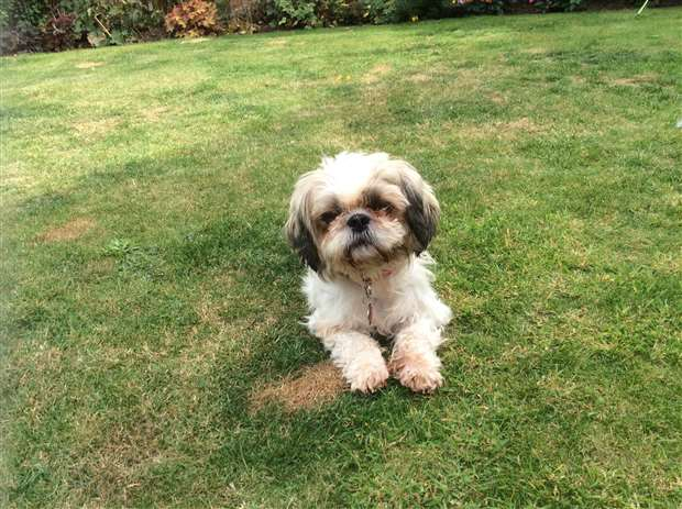 Dog Rescued After Greenhouse Neglect In West Norfolk