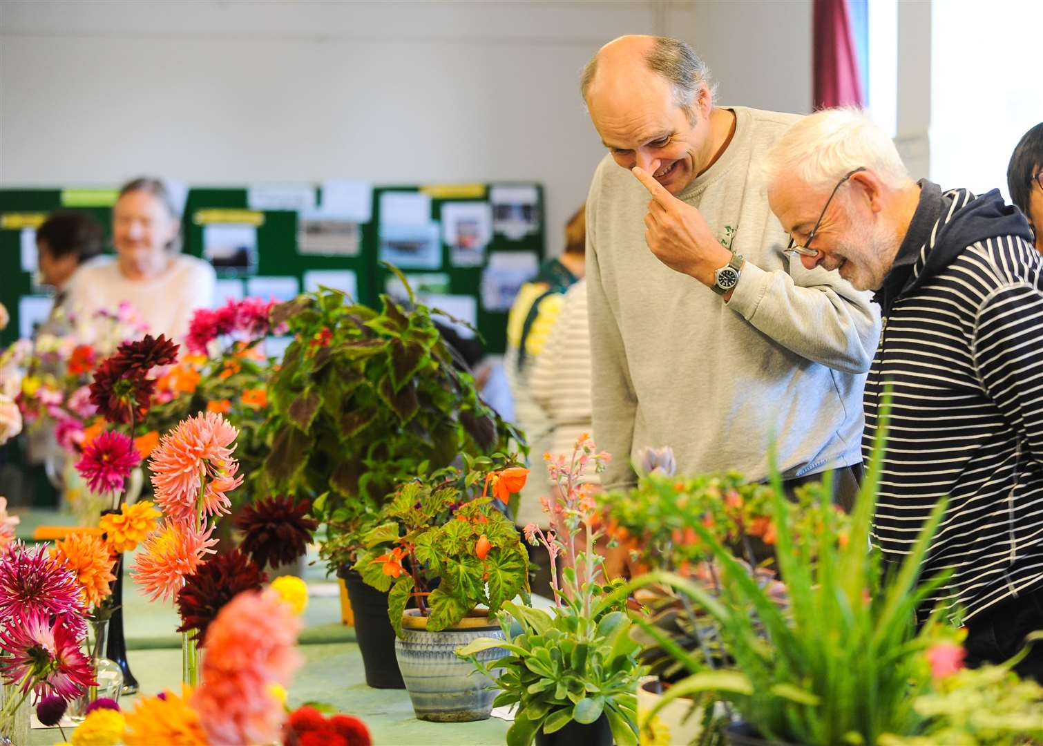 The Greenfingers Gardening Club annual horticultural show at Pott Row Village Hall.. (16251882)