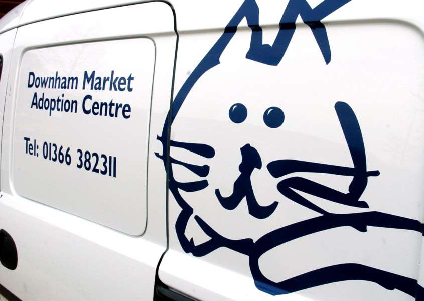 Influx of feral cats in need of homes at the Cats Protection Adoption Centre in Wards Chase.