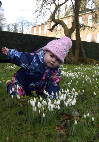Snowdrop Walk at Ryston Hall, Downham Market''Olivia Kane 1