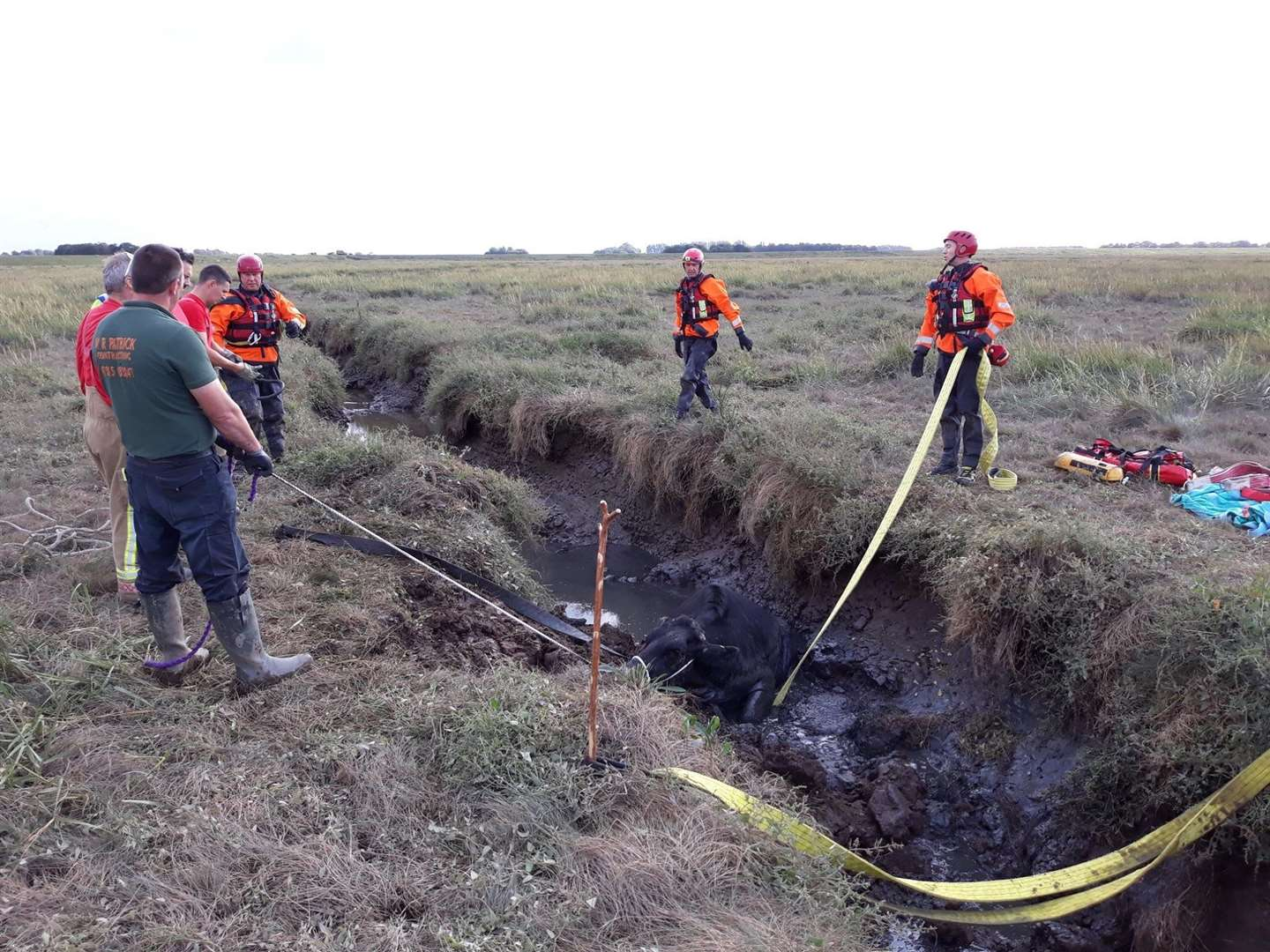 Fire crews rescued a cow which was stuck in Terrington Marsh. Picture: Norfolk Fire and Rescue Service (16546529)