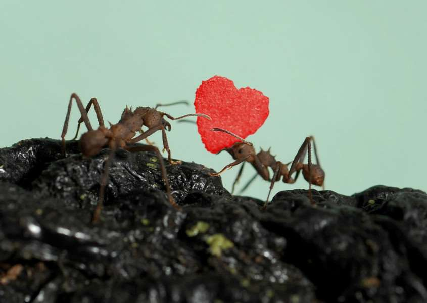 World's tiniest ever Valentine's Day card is delivered to ants living at Hunstanton Sea Life Sanctuary.'' ''Pictures by Jeremy Durkin