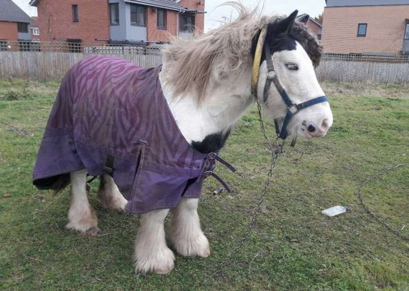 Couple say they have been caring for horse, Clip Clop, since he was abandoned near their home almost five months ago
