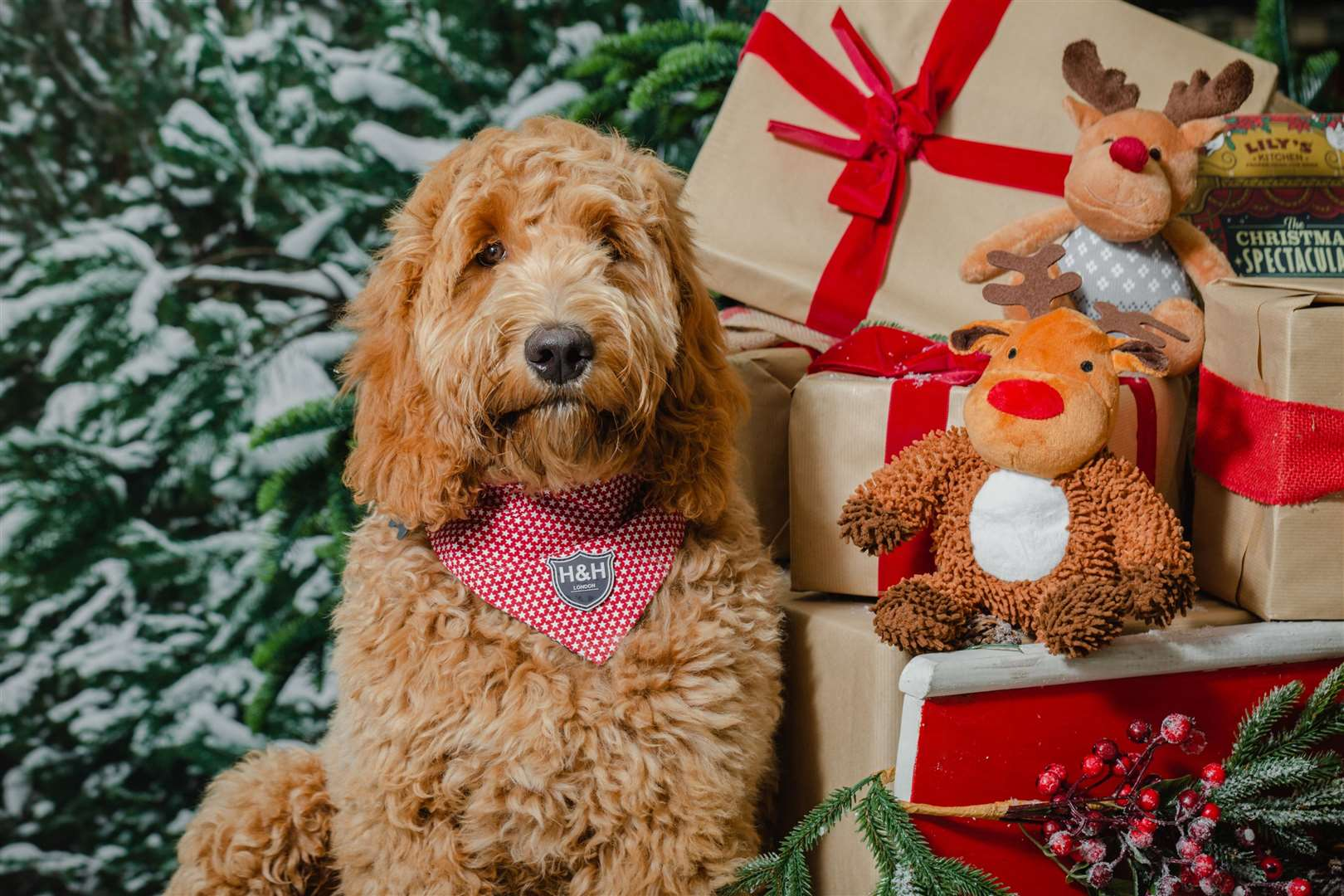 Four-legged friends will be able to have a selfie taken with Santa at Dobbies stores (42780231)