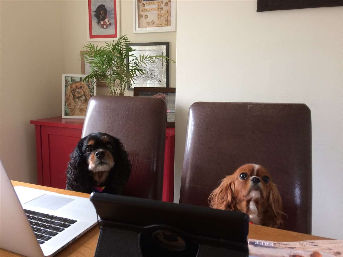 Pictured are canine editor Pupstar and Miss Zsa Zsa. (44634813)