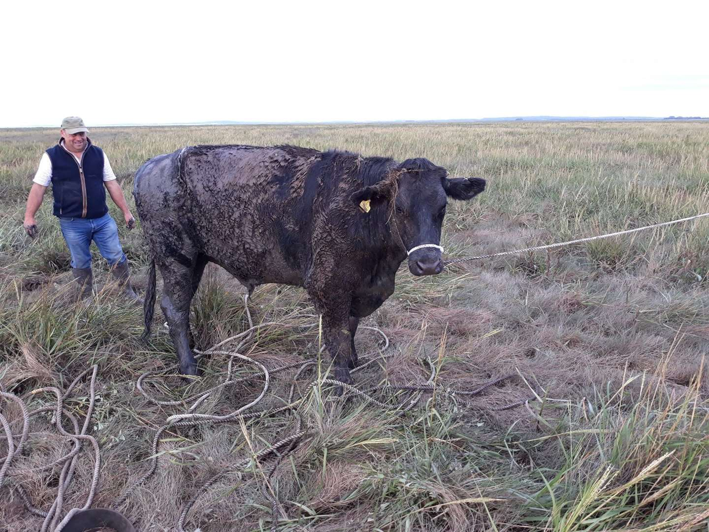 Fire crews rescued a cow which was stuck in Terrington Marsh. Picture: Norfolk Fire and Rescue Service (16546516)