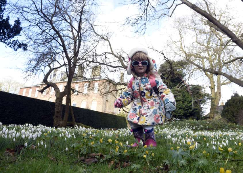Snowdrop Walk at Ryston Hall, Downham Market''Thora-Beth Sole 3