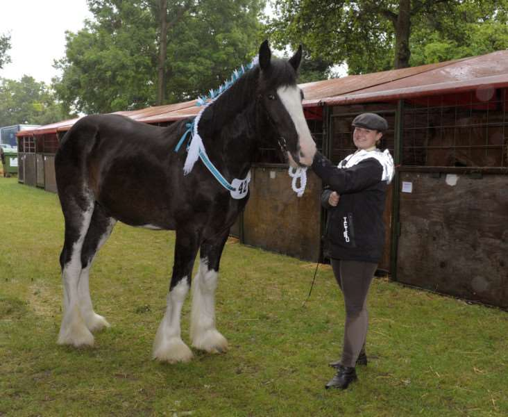 Scenes from The Royal Norfolk Show Norwich 2017 (Day 1 Wednesday)'Katie Butters from King's Lynn with her Shire Horse Scotty.