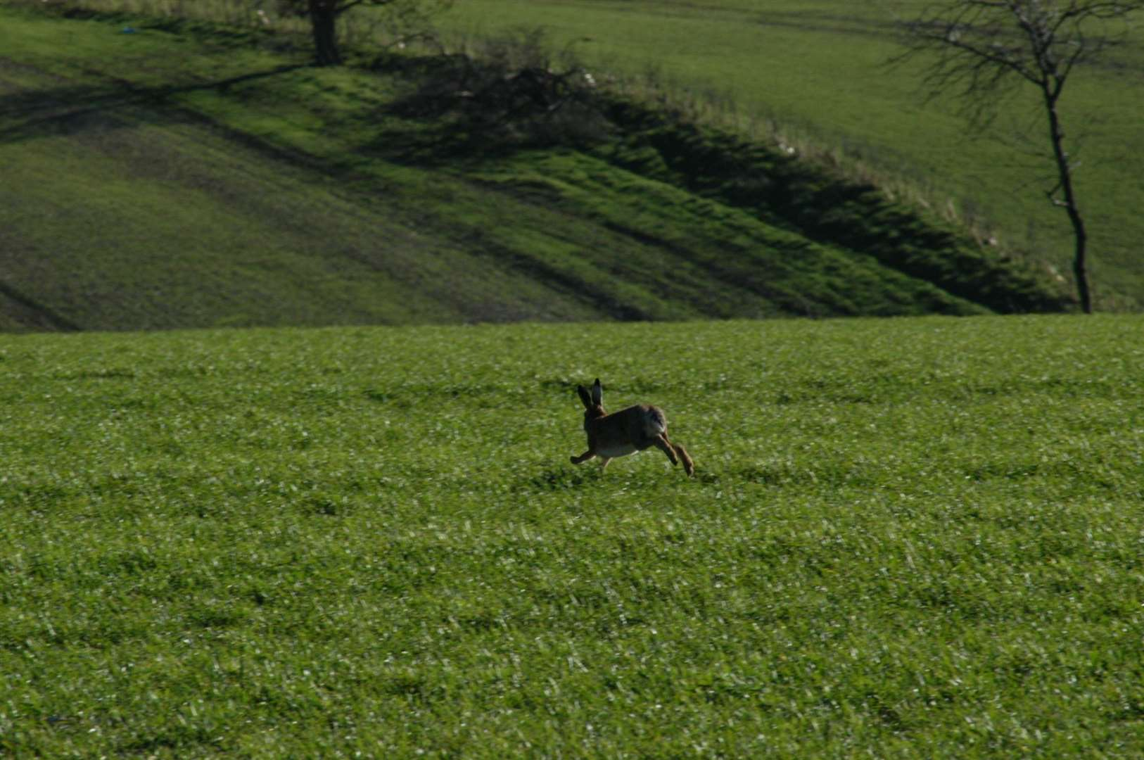 Norfolk Police is warning it will take strong action against anyone taking part in hare coursing