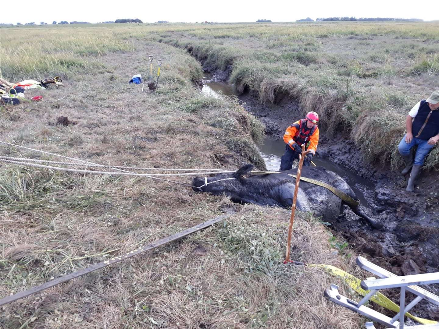 Fire crews rescued a cow which was stuck in Terrington Marsh. Picture: Norfolk Fire and Rescue Service (16546524)