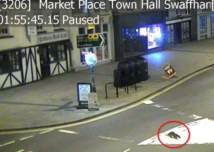 A 'mystery' animal caught on CCTV in Market Place, Swaffham. Photo: Breckland Council.